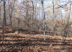 80 Acres – Unrestricted Land in Paw Paw, WV