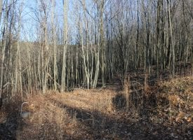 Looking for a Stress FREE Zone? 27.53 Acres to Relax & Unwind