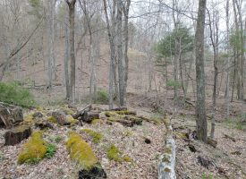 Unrestricted & Affordable!  22.3 ACRES
