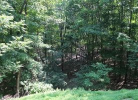 Just in Time for Summer Fun!  20+ Acres