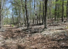 28.88 Acres of Perfect WV Land