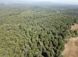 UNRESTRICTED FREEDOM!! 125 ACRES MINERAL CO WV
