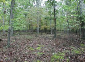 Great Value – 2 Ac Wooded & Level